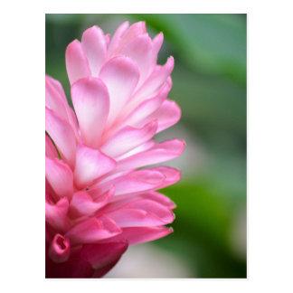 Fleur hawaïenne de gingembre rouge carte postale