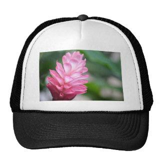 Fleur hawaïenne de gingembre rouge casquettes