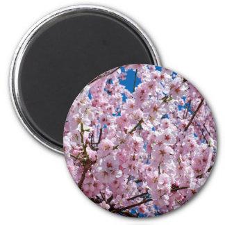 Fleur japonaise de cerise aimant