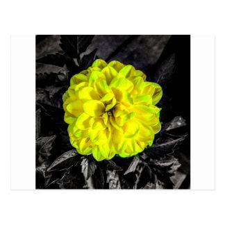 Fleur jaune carte postale