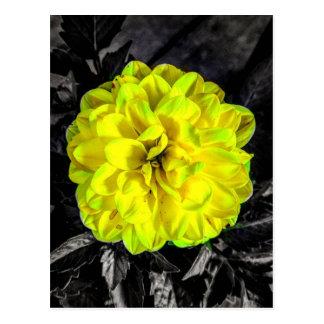 Fleur jaune cartes postales