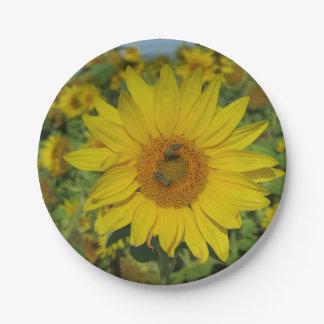 fleur jaune de fleur de sund assiettes en papier