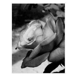Fleur noire cartes postales