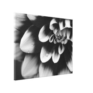 Fleur noire et blanche de fleur de dahlia toiles