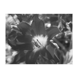 Fleur noire et blanche toiles