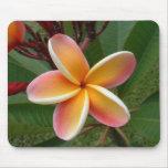 Fleur Oahu Hawaï de Plumeria Tapis De Souris