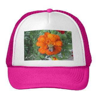 Fleur orange d'abeille de souci casquette