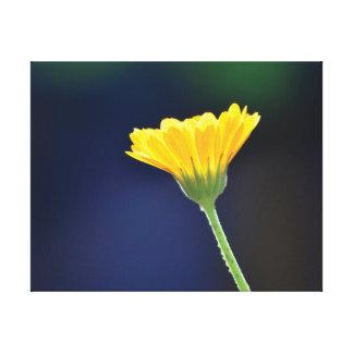 Fleur orange de belle photo en gros plan sur le toiles