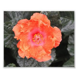 Fleur orange et rose d'élargissement de photo -
