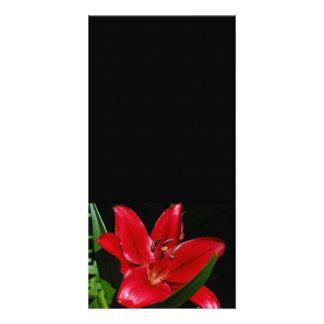 Fleur Photocard de Daylily Photocarte