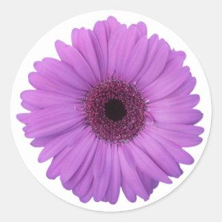 Fleur photographique assez pourpre de marguerite sticker rond