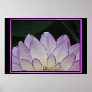 Fleur pourpre rose de Dalia Affiche