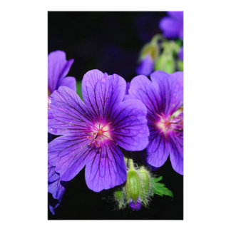 Fleur Prospectus