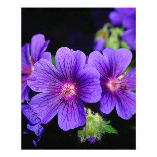 Fleur Prospectus En Couleur