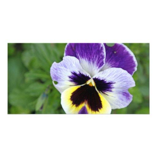 fleur renversante de pensée photocarte
