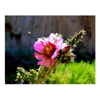 Fleur rose de cactus avec l'insecte de vol carte postale