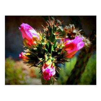 Fleur rose de cactus carte postale
