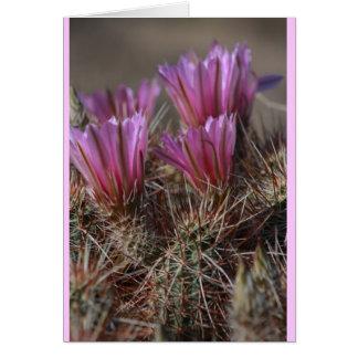 Fleur rose de cactus de désert carte de vœux