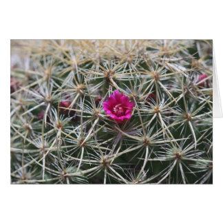 Fleur rose de catus de baril carte de vœux
