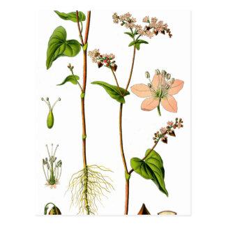 Fleur rose de fines herbes cartes postales