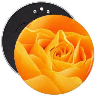 Fleur rose de floraison, pétales - jaune badge