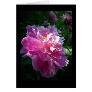 Fleur rose de pivoine, carte de voeux vierge