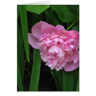Fleur rose de pivoine - photographie carte de vœux