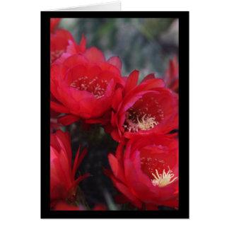 Fleur rouge de cactus carte de vœux