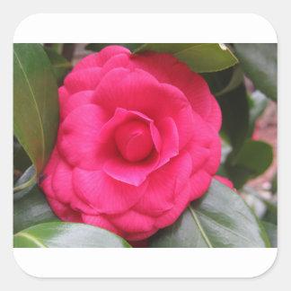 Fleur rouge de cognassier du Japon Rachele Odero Sticker Carré
