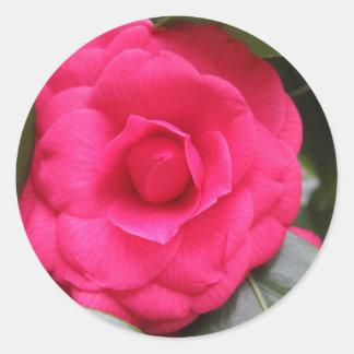 Fleur rouge de cognassier du Japon Rachele Odero Sticker Rond