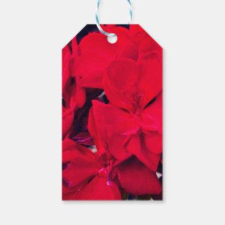 Fleur rouge de géranium étiquettes-cadeau