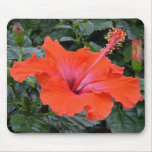 Fleur rouge de ketmie tapis de souris