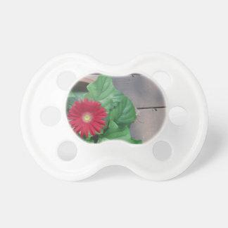 Fleur rouge de marguerite de Gerber Sucettes Pour Bébé