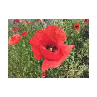 Fleur rouge de pavot toile