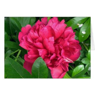 Fleur rouge de pivoine - photographie carte de vœux