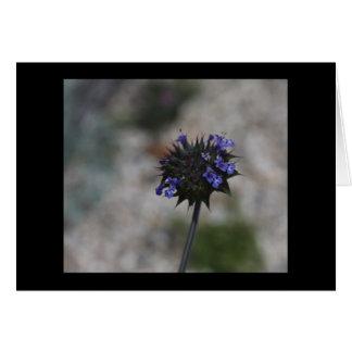 Fleur sauvage Borrego Springs la Californie de Carte De Vœux