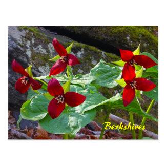 Fleur sauvage de Trillium rouge de Berkshires le Carte Postale