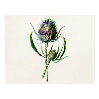Fleur sauvage de vieux chardon écossais du cru carte postale