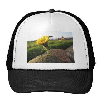 Fleur sauvage jaune s'élevant sur des pierres au casquette
