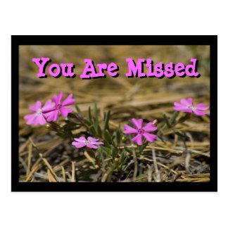 Fleur sauvage voyant occidental de Phlox Carte Postale
