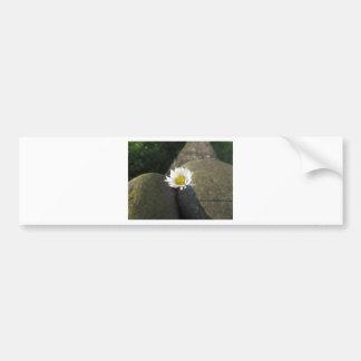 Fleur simple de marguerite blanche entre les autocollant de voiture