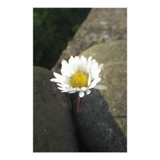 Fleur simple de marguerite blanche entre les papeterie