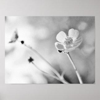 Fleur simple noire et blanche posters