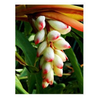 Fleur tropicale exotique luxuriante cartes postales