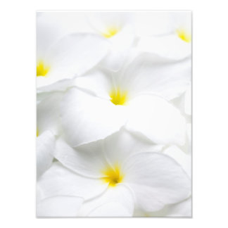 Fleur tropicale hawaïenne de Frangipani blanc de Impression Photographique