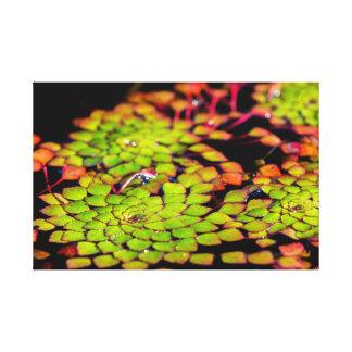 Fleur verte de l'eau toile