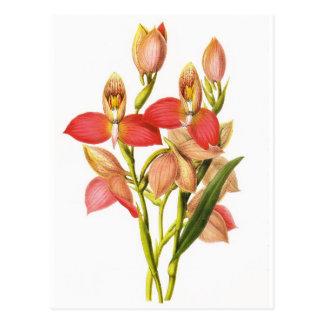 Fleur vintage cartes postales