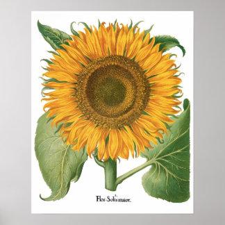 Fleur vintage de tournesol par Basilius Besler Posters