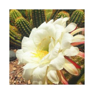 Fleur vive de désert toiles