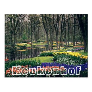 Fleurs à Keukenhof, à région boisée et à canal Carte Postale